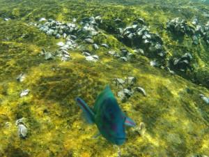 Kamoska pod vodou